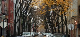 Greenpoint Trees and Cobblesto