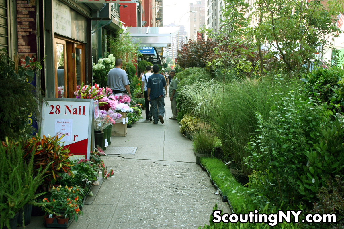 The Jungles Of West 28th Street