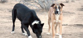 New Scouting LA Post: These Two Desert Best Friends Would Love To Find A Home